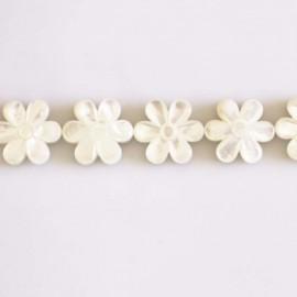 Pearly white 15 mm marguerite